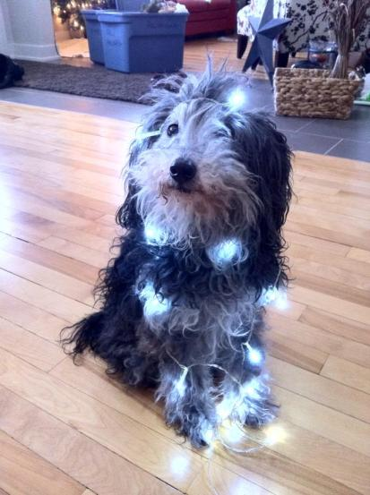 I seem to have gotten tangled up in the Christmas lights